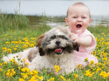 Fearful Dogs and Small Children