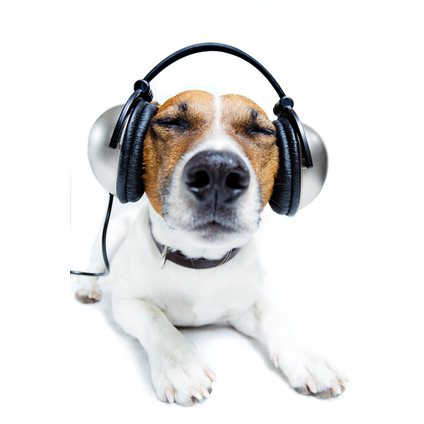 The Effect Of Classical Music On Anxious & Fearful Dogs