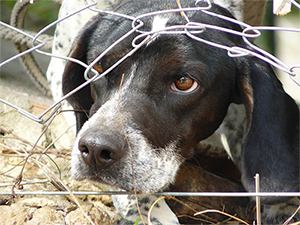 Puppy Mills 103 - Selling Dogs: The LOW Down of Mills