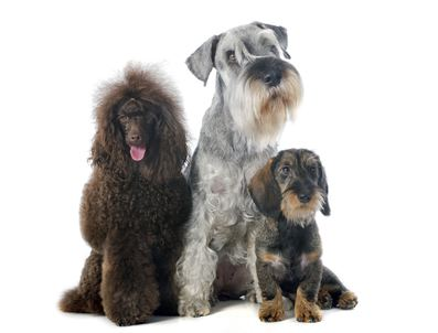 Thinking Of Adding A Dog To Your Family?