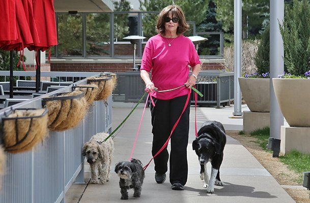 suny weber city dog walking ettiquette