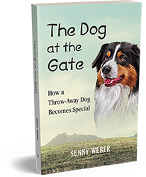 the dog at the gate sunny weber book cover