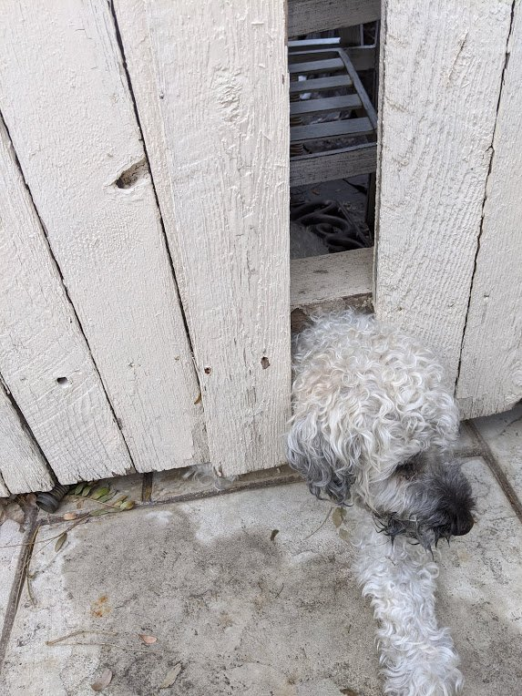 Bailey stuck in fence