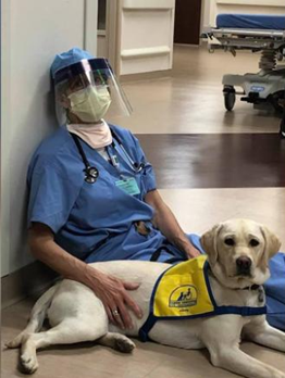 Medical worker and dog three