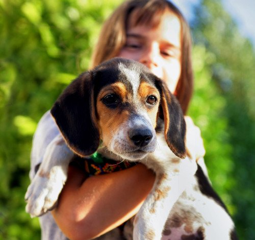 girl-with-beagle