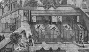 Puppy Mill illustration