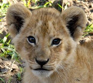 Masai Mara National Reserve, Kenya Africa