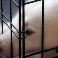 puppymill-dog-in-cage